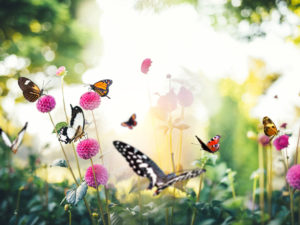 Flowers and butterflies at one of the most popular nature sanctuaries in Houston.