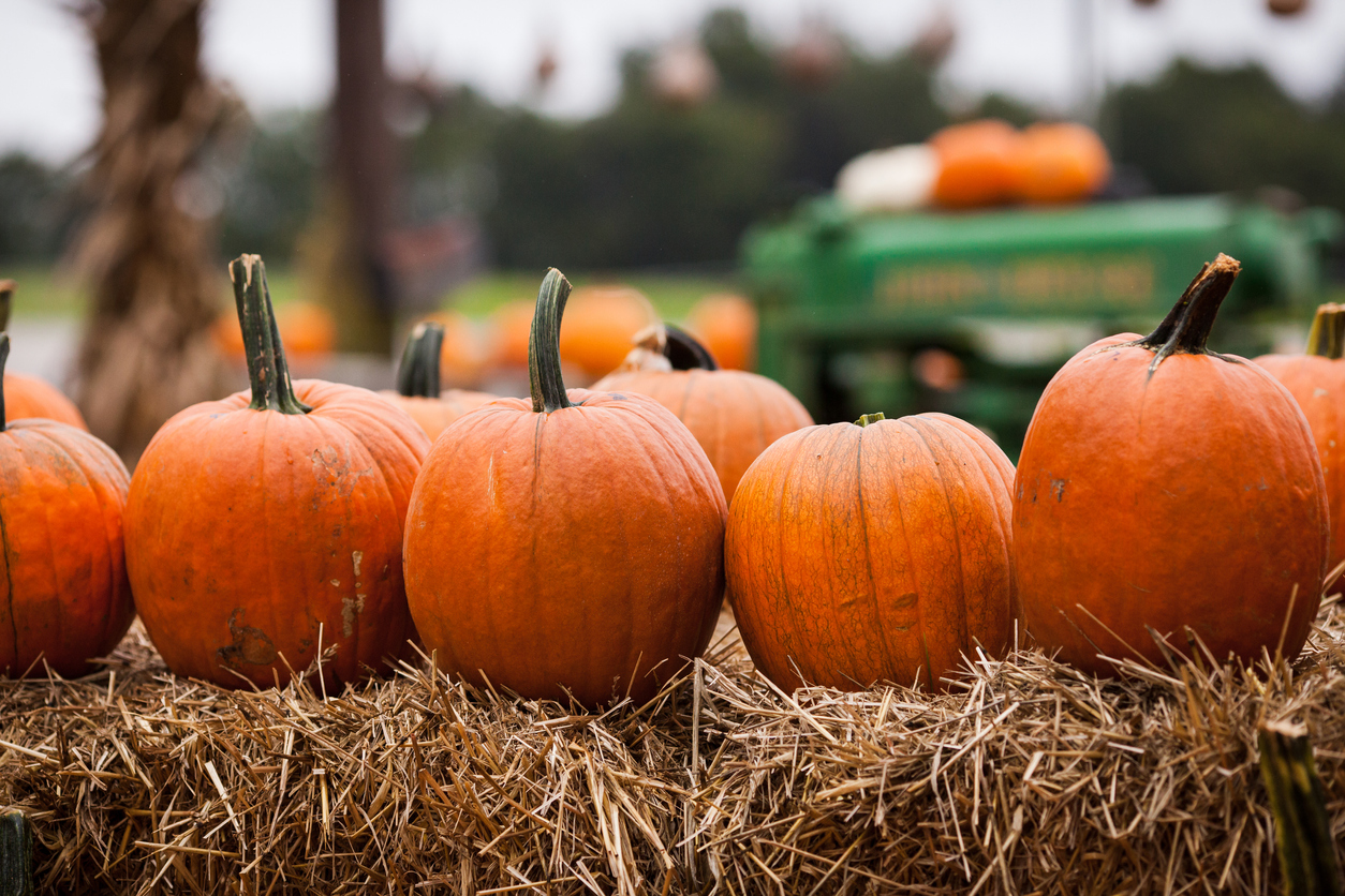 A row of pumpkins on a hay bale.