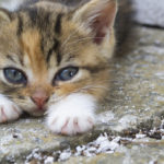 a small kitten | support Houston animal shelters
